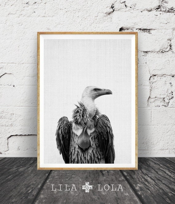 Vulture Print, Black and White Bird Photography, Animal Print, Halloween Decor, Steampunk Wall Art, Bird of Prey, Printable Art, Vulture Art