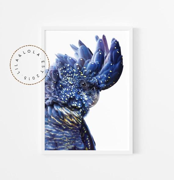 Black Cockatoo Print - Digital Download