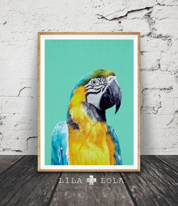Tropical Bird Print, Parrot Wall Art, Bird Photography, Macaw Parrot, Large Printable Poster, Aqua Blue and Yellow Tropical Wall Art Decor