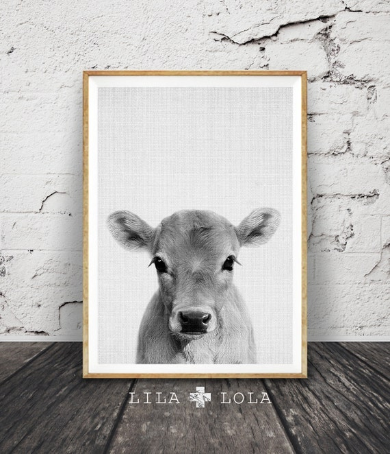Calf Print, Baby Cow Farm Animal Wall Art, Nursery Decor, Large Printable Poster Digital Download, Farmhouse Decor, Photo Babies Room