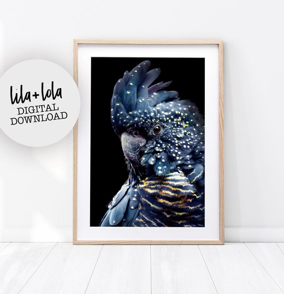 Black Cockatoo Print - Digital Download