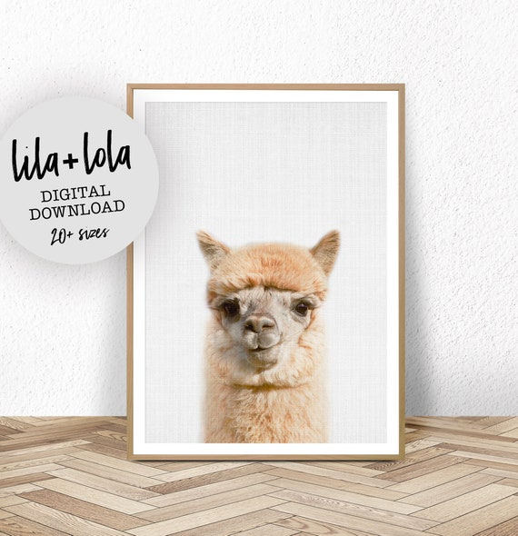 Alpaca Print - Digital Download