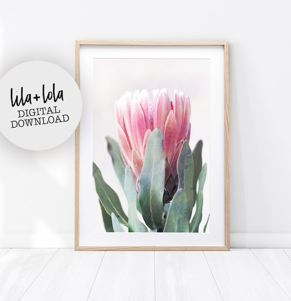 Protea Print, Flower Wall Art, Printable Poster, Digital Download, Australian Native Photography, Pink Flower Decor, Botanical Native Print