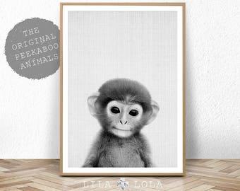 Baby Animal Nursery Art, Monkey Printable Wall Art, Safari Decor, Large Nursery Poster, Digital Download, Black and White Baby Monkey