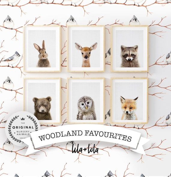 Woodland Animal Favourites Collection - Digital Download