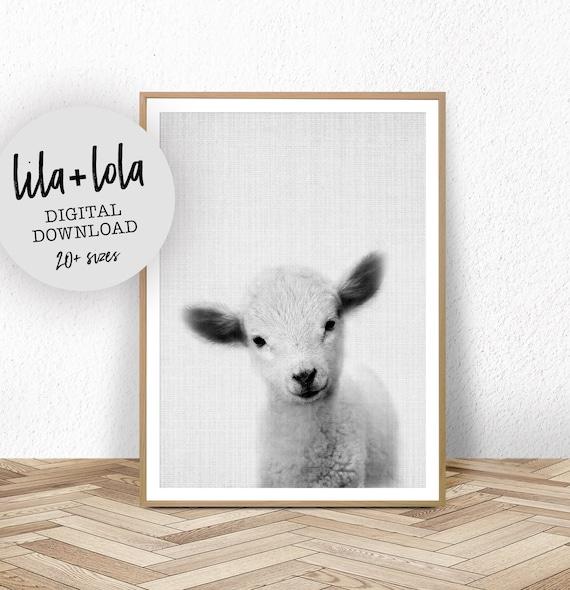 Lamb Print - Digital Download