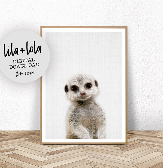 Baby Meerkat Print - Digital Download