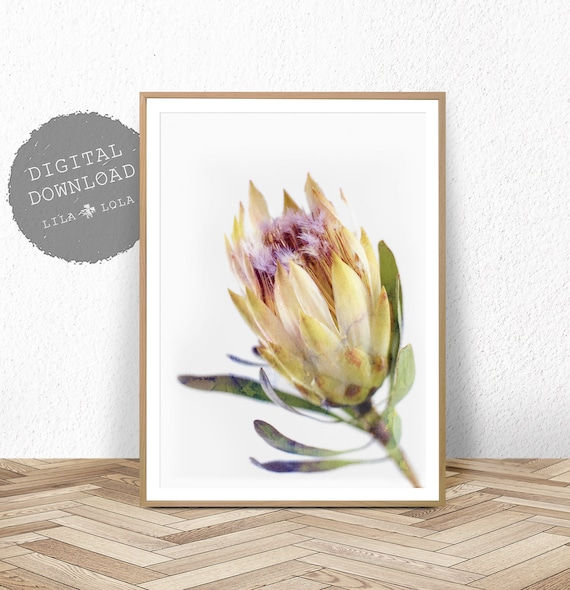 Protea Print, Australian Native Flower Wall Art, Watercolour, Printable Poster, Digital Download, Photography, Yellow Flower Decor