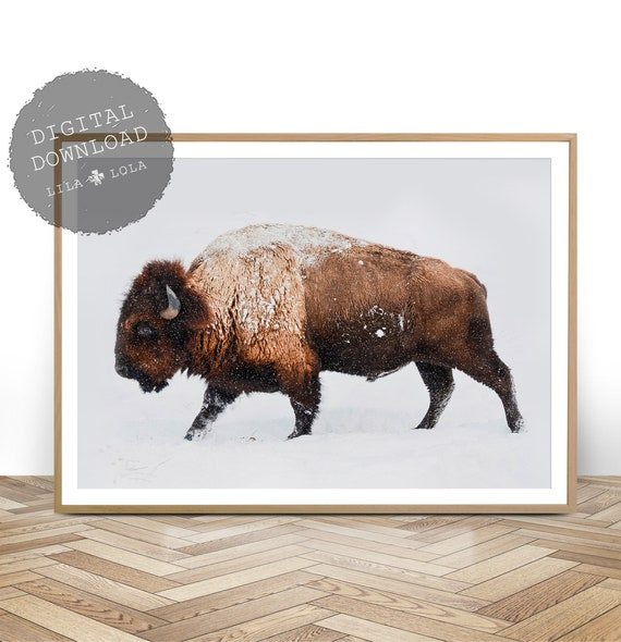 Buffalo Photography, South Western Decor, Bison Print, Digital Download, Large Wall Art, Modern Wall Art, Wilderness Photography