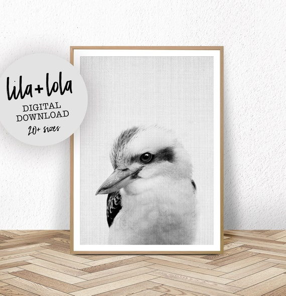 Kookaburra  Print - Digital Download