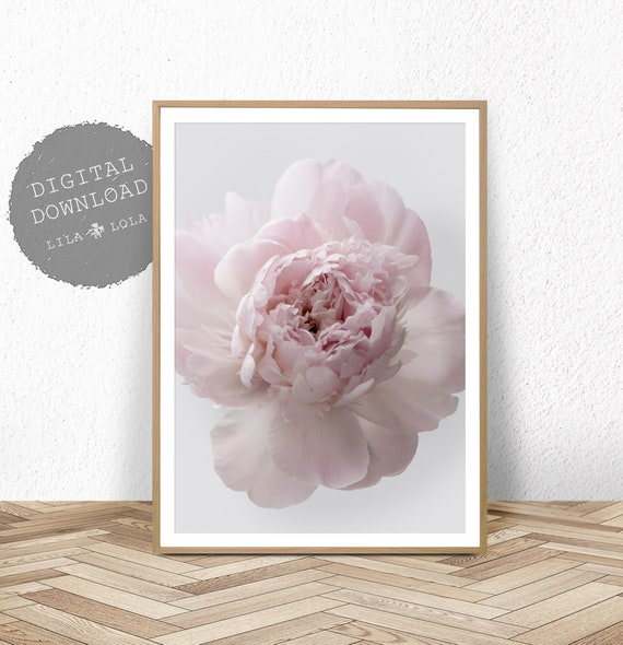 Peony Rose Print, Peonie Wall Art, Printable Photography, Pink and Grey, Digital Download, Bedroom Decor, Floral Poster, Peony Printable