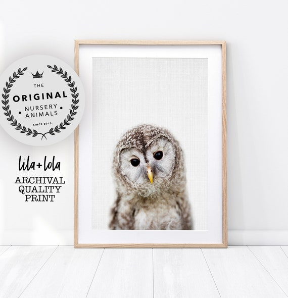 Baby Owl Print - Printed and Shipped