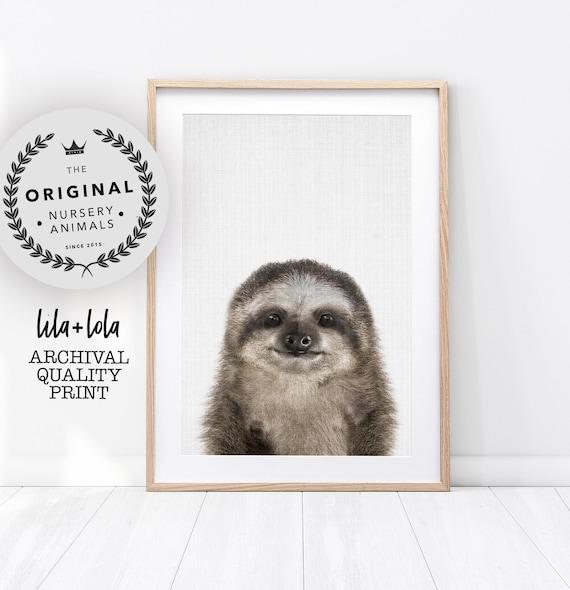 Baby Sloth Print - Printed and Shipped