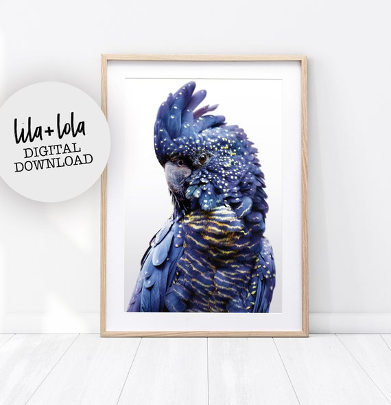 Black Cockatoo Print #2 - Digital Download