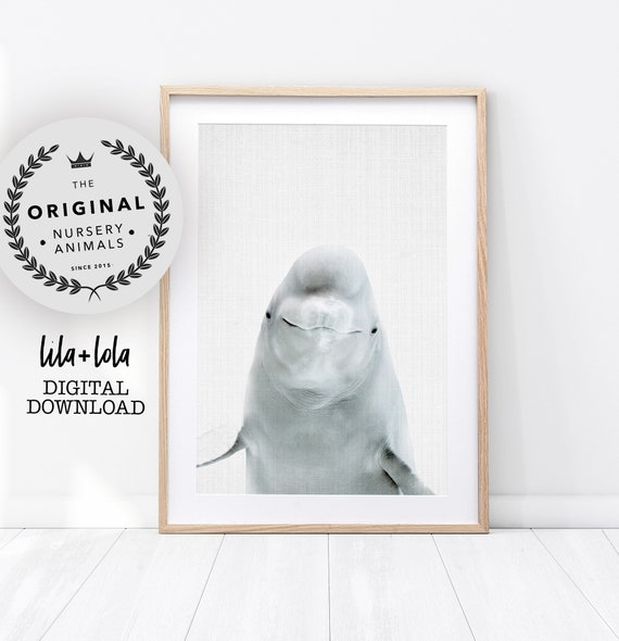 Beluga Whale Print - Digital Download