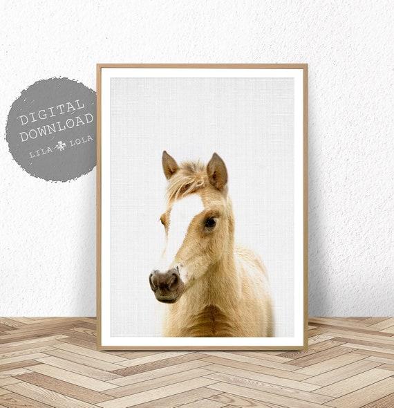 Nursery Wall Art, Farm Animal Print, Digital Download, Printable Baby Horse, Foal Poster, Kids Room Wall Art, Farmhouse Decor, Nursery Print