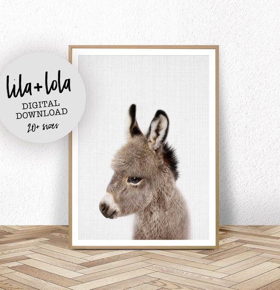 Baby Donkey Print - Digital Download