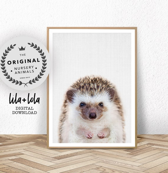 Baby Hedgehog Print - Digital Download