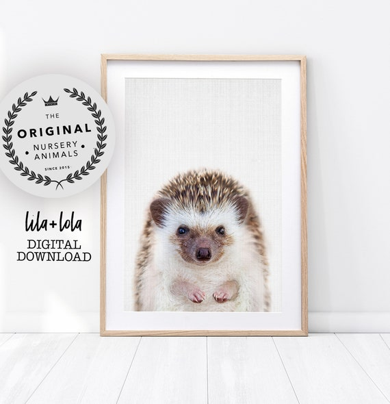Baby Hedgehog Print - Digital Download