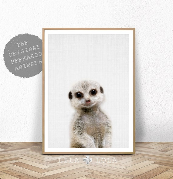 Peekaboo Baby Meerkat Print - Digital Download