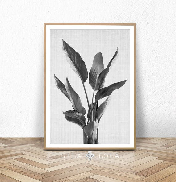 Plant Wall Art Print, Black and White Botanical, Large Photography Poster, Modern Minimalist, Printable Digital Download, Tropical Decor