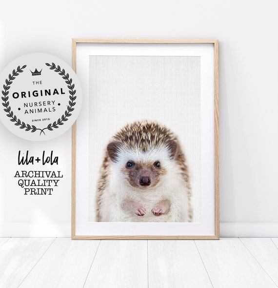 Baby Hedgehog Print - Printed and Shipped