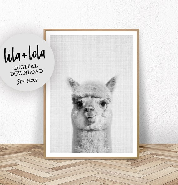 Alpaca Print - Digital Download