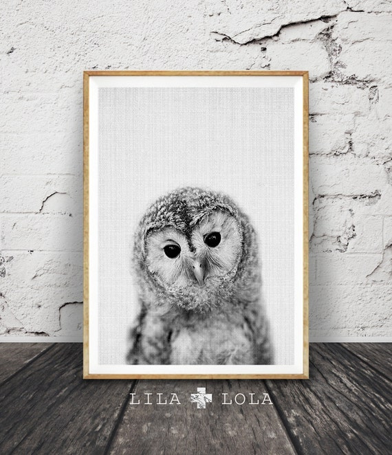 Owl Print, Woodlands Nursery Wall Art, Printable Poster, Black White and Grey, Animal Photo, Gender Neutral Kids Room, Digital Download