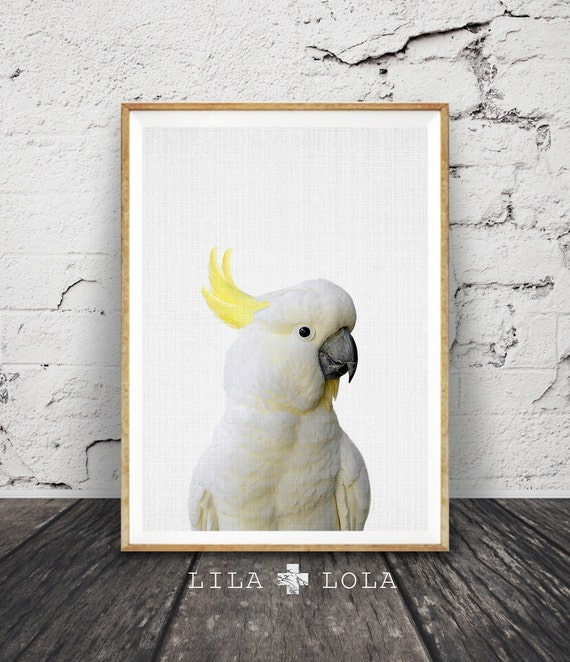 Cockatoo Print, Australian Bird, Animal Photo Wall Art, Colour Photography, Printable Digital Download, Large Poster, Modern Minimalist