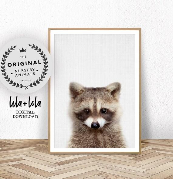 Baby Raccoon Print - Digital Download