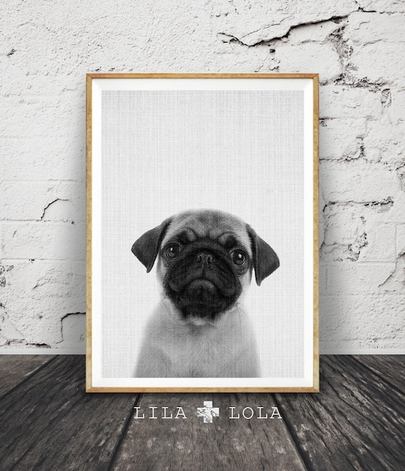 Pug Print, Puppy Dog Wall Art, Black and White Photo, Printable Poster, Digital Download, Kids Room, Nursery Animal Decor, Modern Minimalist