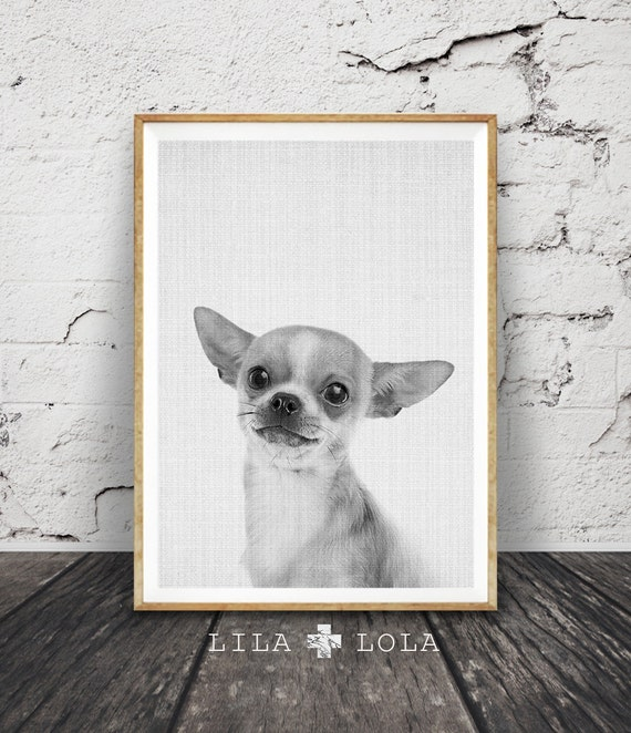 Chihuahua Print, Puppy Dog Photo, Nursery Animal Decor, Printable Poster, Digital Download, Black and White Minimalist, Grey
