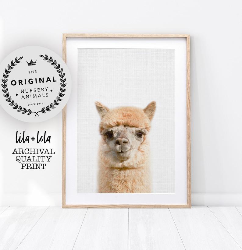Alpaca Print Llama Wall Art  Printed and Shipped Poster  image 0