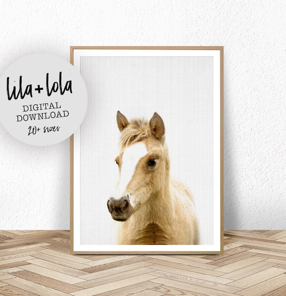 Foal Print - Digital Download