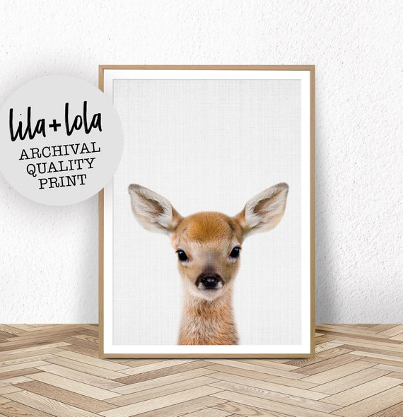 Deer Fawn Print - Printed and Shipped