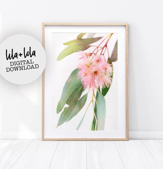 Gum Blossom Print - Digital Download