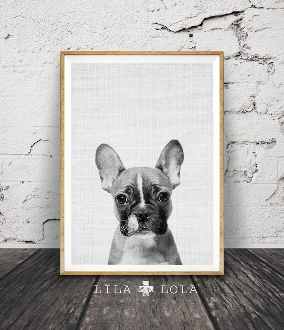 French Bulldog Wall Art Print, Guys and Mens Gift, Black and White Dog Photo, Large Printable Poster, Digital Download, Modern Minimalist