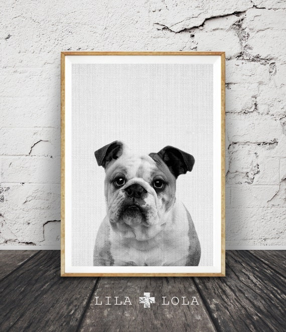 English Bulldog Print, Dog Wall Art, Black and White Photo, Large Printable Poster, Instant Digital Download, Modern Minimalist Bulldog