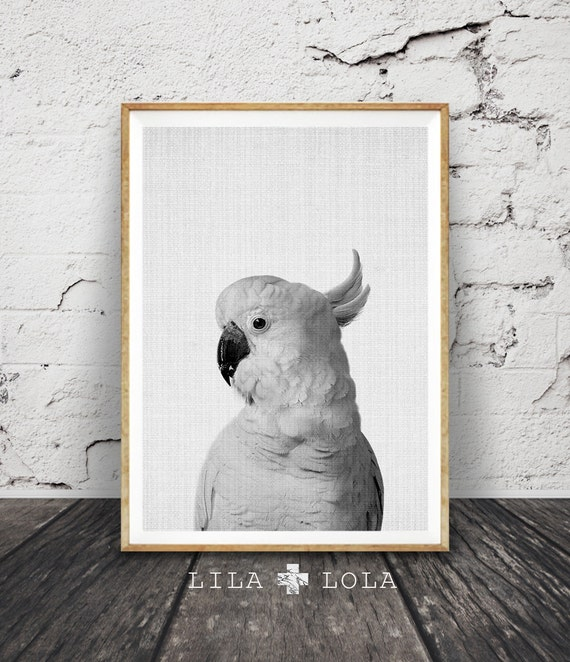 Cockatoo Print, Australian Bird, Animal Photo Wall Art, Black and White, Printable Digital Download, Large Poster, Modern Minimalist