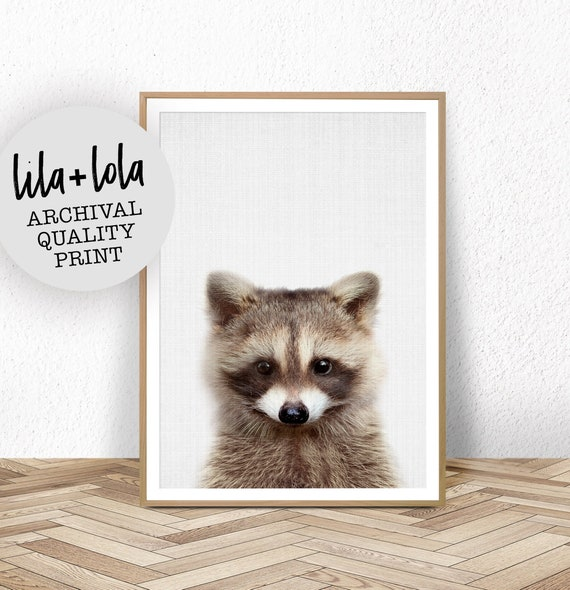 Baby Raccoon - Printed and Shipped