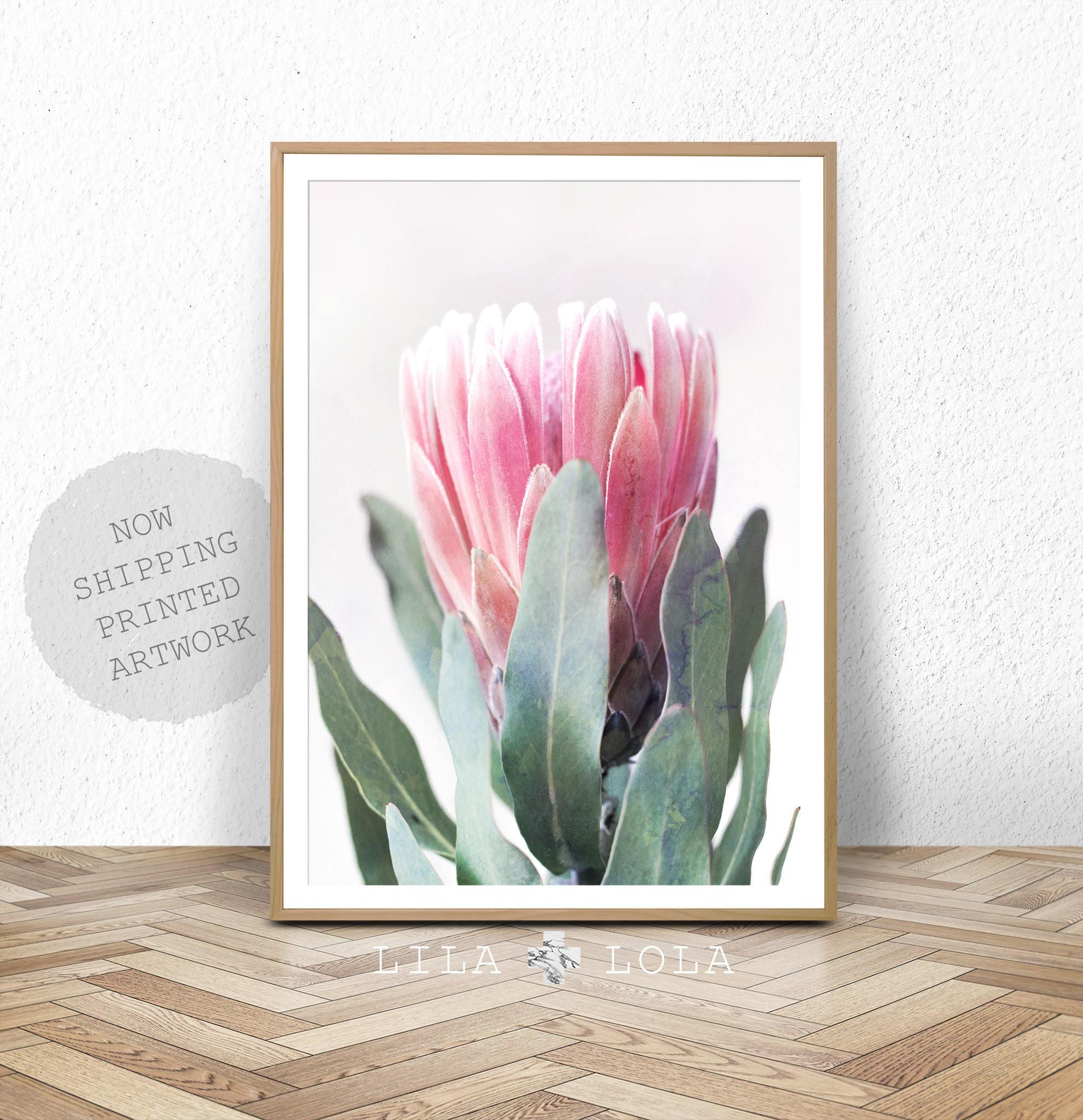 Protea Print Flower Wall Art Australian Native Photography Pink