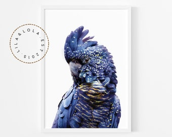 Black Cockatoo Print, Australian Parrot Wall Art, Bird Photography - Printable Digital Download Poster