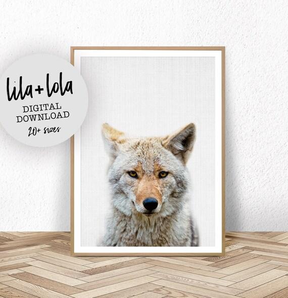 Coyote Print - Digital Download