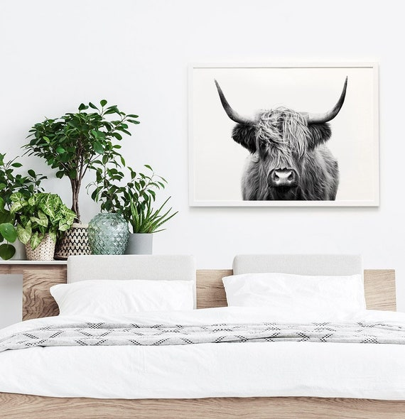 Highland Cow Print - Printed and Shipped