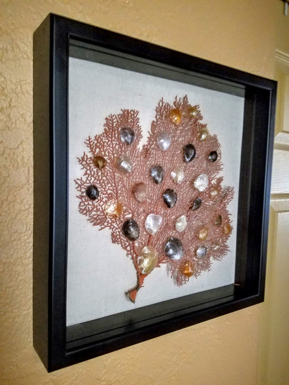 Sea Fan Shadowbox with Capiz Shells