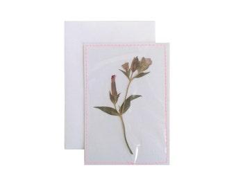 Droogbloem 1 I Mini Ansichtkaart/Postcard