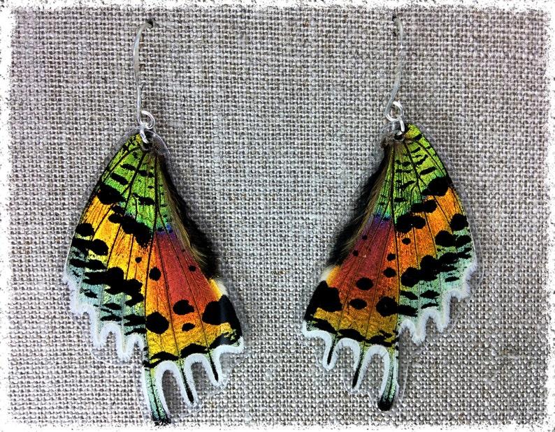 88ef15574ffd30 Real Butterfly Jewelry Butterfly Earrings butterfly wings | Etsy