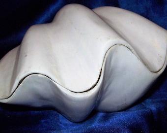 "Large Rare Real Polished White China Tridacna Giant Clam Shell - Real Natural Aquarium / Wedding / Nautical Themed Decor Coral 5-8"""