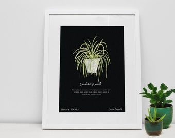 Spider Plant House Plant Print by Katie Duffett