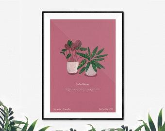 Calathea House Plant Print by Katie Duffett